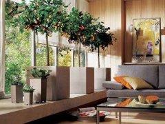 细数旺宅旺财的风水花卉植物