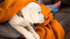 狗狗可穿戴设备Whistle 用数据跟踪宠物健康状况