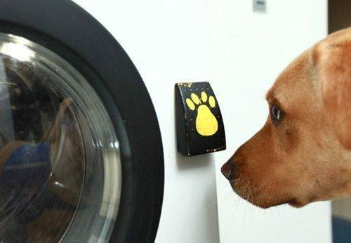 工作犬操作的洗衣机。