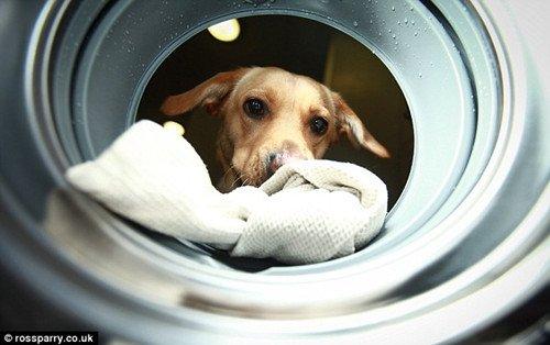 """""""汪""""地叫一声,洗衣机就可以被启动啦。"""