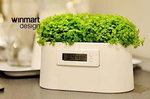 靠植物发电的电子钟